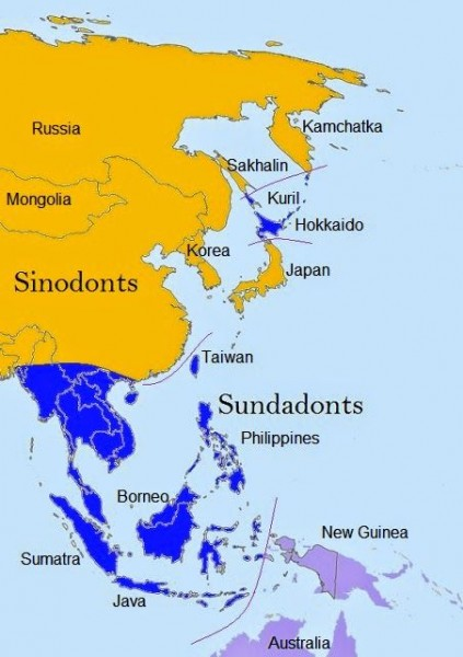 Figure 5 Distribution of Sinodonts and Sundadonts in Asia