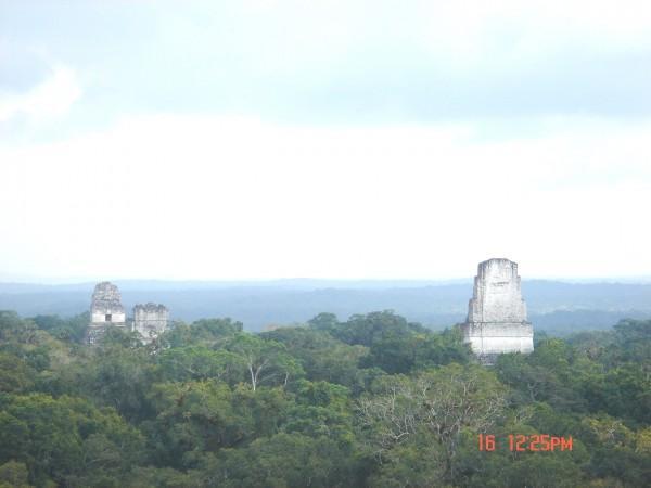 馬雅的呼喚Px 02 提卡雨林廟塔藏Tikal Feb-16-07